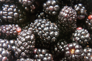 blackberries_02